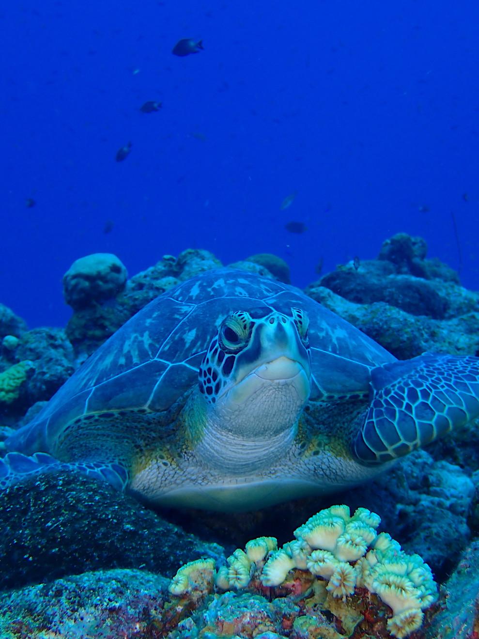 Diving Klein Curacao